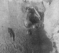 Volcanic Domes on Venus